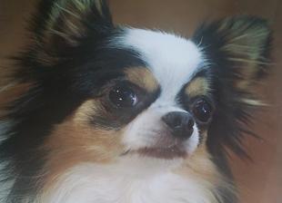 チャンピオン犬のイメージ